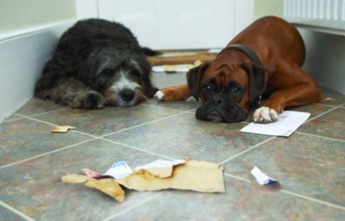 12 Dog Myths - BUSTED!