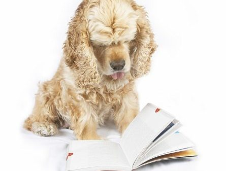 How Clever Is Your Dog?