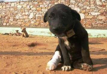 A puppy recovering after treatment at TOLFA