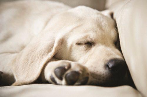 Raw Revolution - Dog Nutrition Expert Q & A