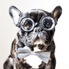 The Best Dogs of Instagram (what do you think number 6 is looking for!)