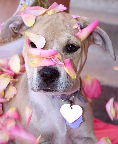 2654424594_0d2ed54588_dog-owner