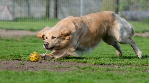 These 4 Dogs Outdid Themselves When it Came to Costing Their Owners a FORTUNE!