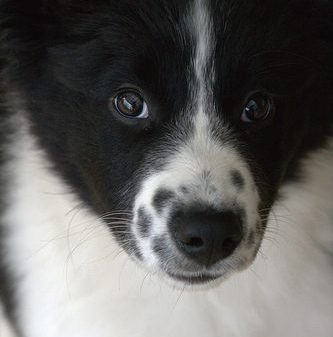 Book Club: The Secret Dog