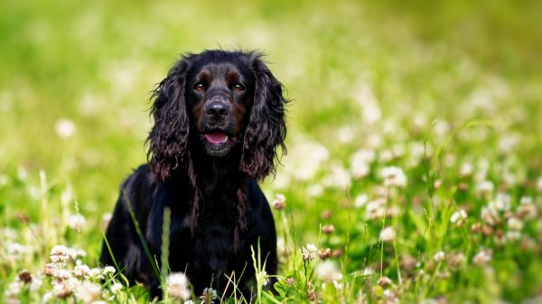 5 Signs Your Dog Might Have Sensitive Skin