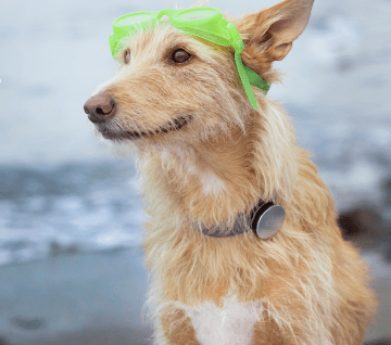 5 of The Best Dog Products of 2014