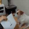 Genius Dog Gives Owner Answers to Maths Problems by Giving Paw