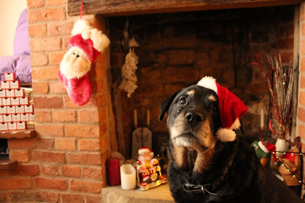 here are 7 amazing christmas gifts that our dogs love so we think your dog will too