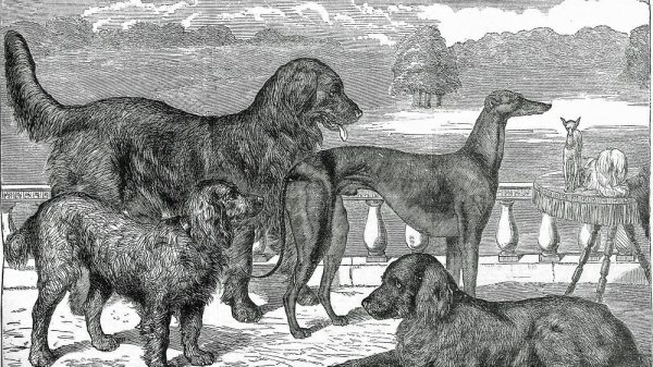 Modern Dog Breeds Were Victorian Inventions