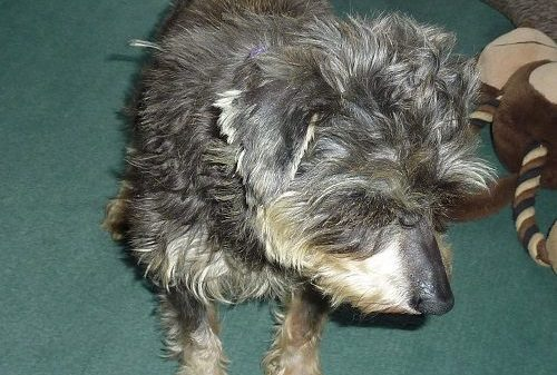 Puppy Farming - The Great Disgrace