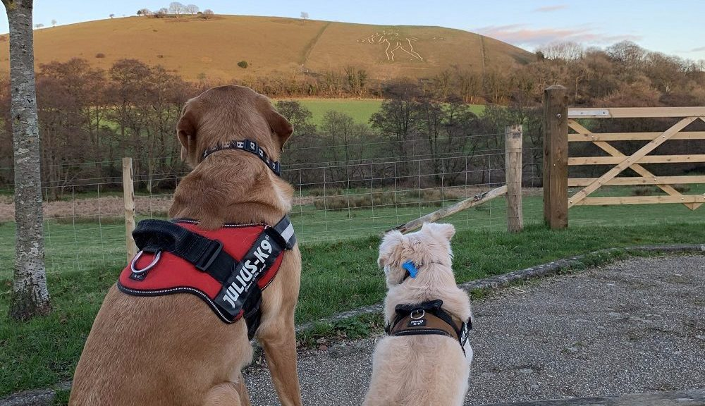 Burnbake Forest Lodges Review - Dog Friendly Dorset