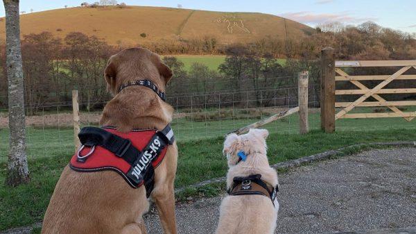 Burnbake Forest Lodges Review - Dog Friendly Dorset