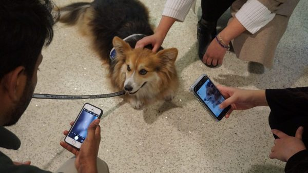 Meet the Dogs Helping Stressed Out Students During Exams