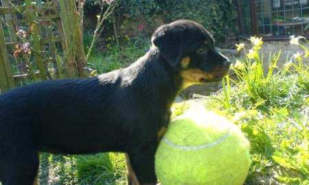 Mia protecting her giant tennis ball