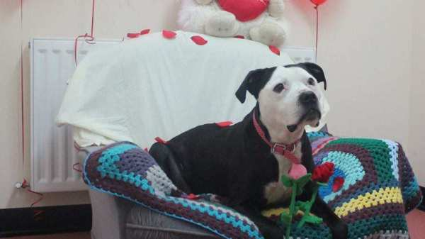 Desperately Seeking a Home: This 10-Year Old Dog Has Spent EIGHT YEARS In Rescue