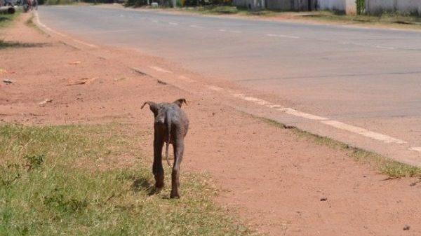 Has One Organisation Found the Key to Solving Sri Lanka's Street Dog Problem?