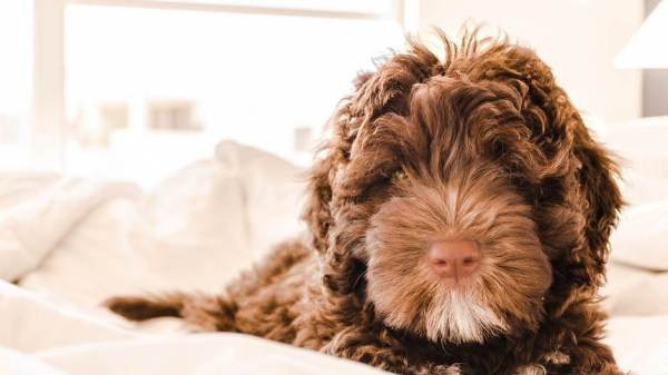 How Can I Help My Dog Lose Weight?