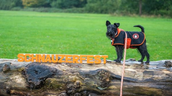 What Is Schnauzerfest?