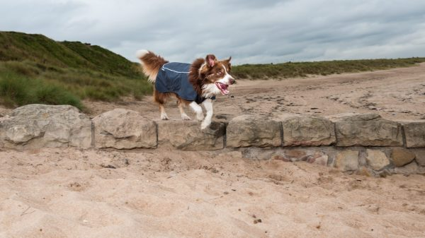 These 4 Products Are Just What You & Your Dog Need This Autumn