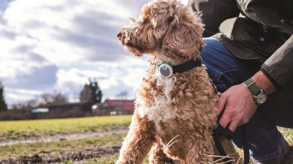 3 New Year's Resolutions That Will Make Your Dog Happier & Healthier