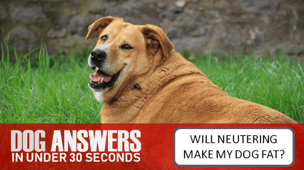 What Happens When My Dog Gets Neutered?