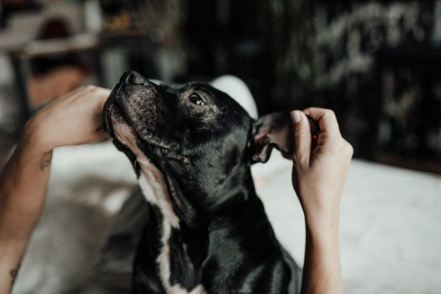 The Most Commonly Asked Dog Training Questions (Answered)