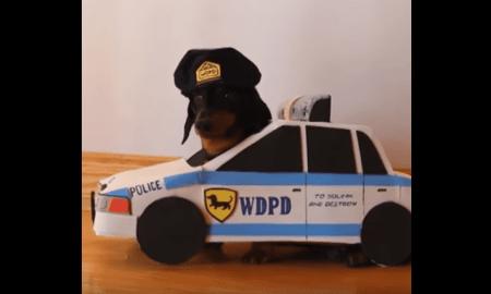 crusoe-police-dog