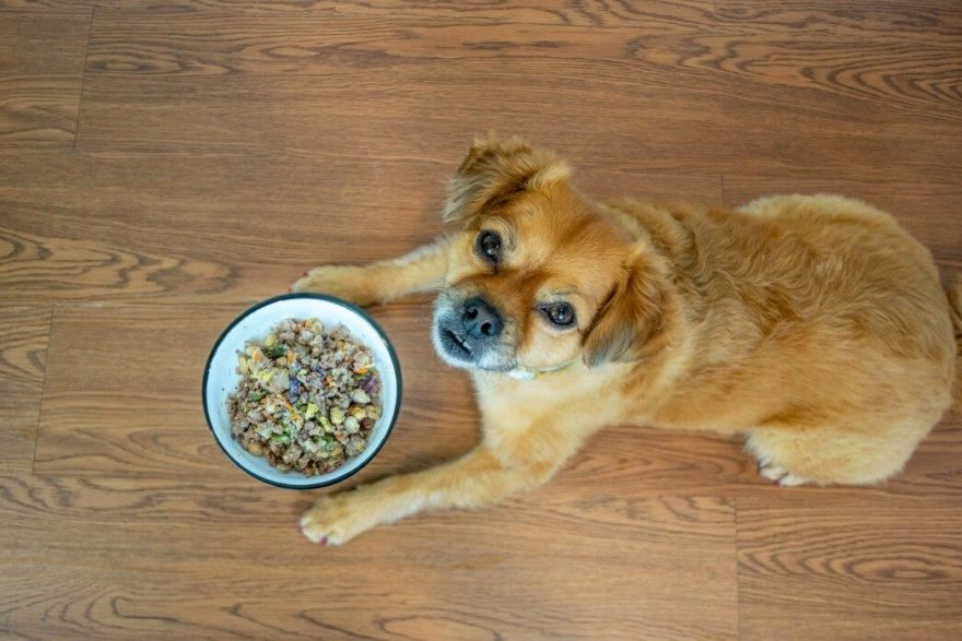 Why Is My Dog Farting So Much? (4 Ways To Help Gassy Dogs)