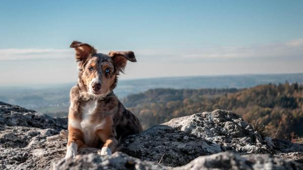 Can You Name Which Countries These 15 Dog Breeds Originate From?