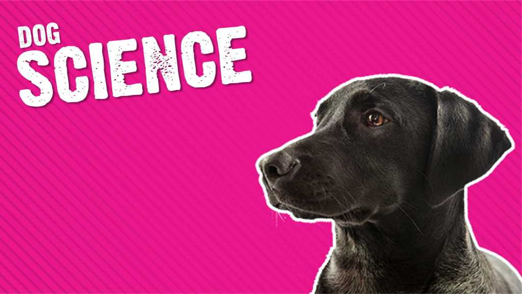 Dog Science: New Scientific Discoveries About Dogs