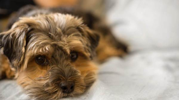Best Dog Health Products: Under the Spotlight