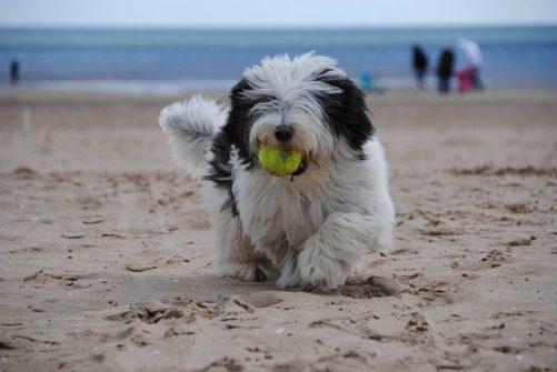 dog play photo
