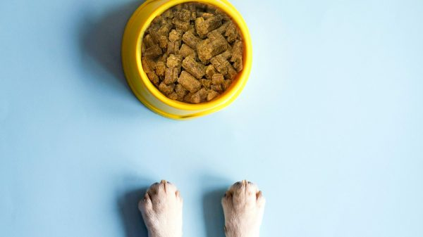 7 Incredible Health Benefits of Cold Pressed Dog Food