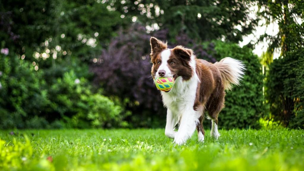 How to Teach Your Dog to Fetch (Anything)