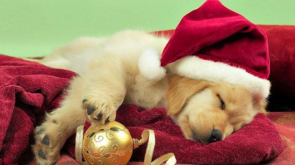 How to Spot a Puppy Farmer This Christmas