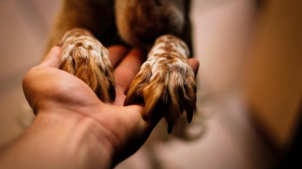 What Is A Titer Test For Dogs?