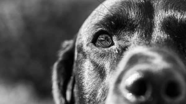 Why Does A Dog Attack Unprovoked? The Psychology Of Dog Attacks