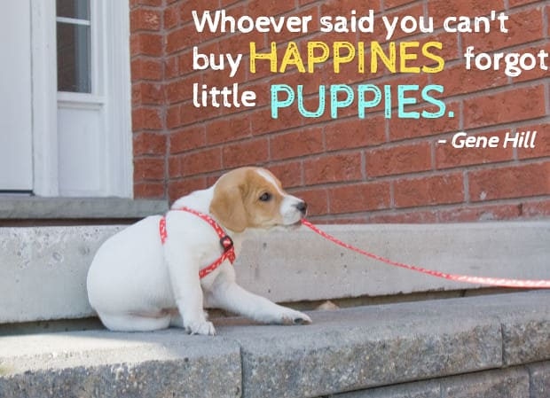 25 Dog Quotes (With Pi...