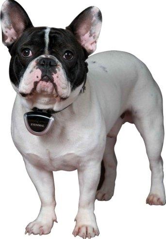 dog video camera