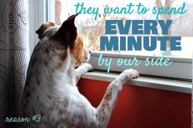 dog love sayings