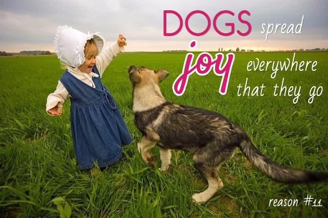 favorite dog sayings
