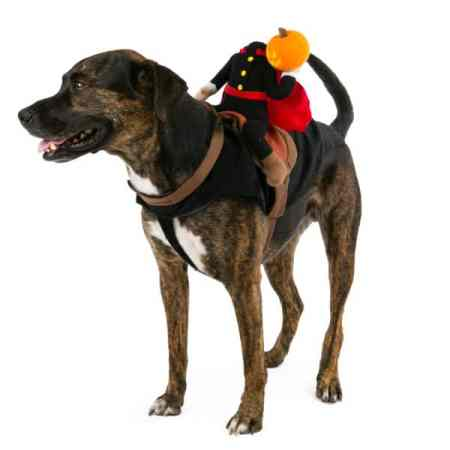 halloween costume for dog