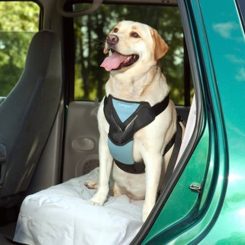 seatbelt for dogs