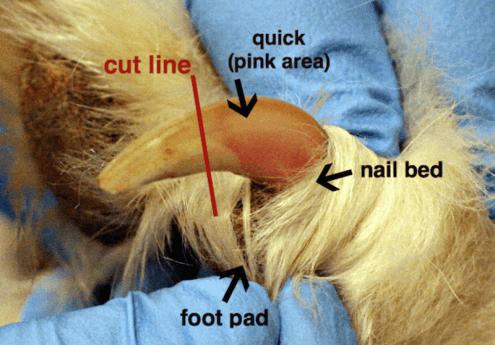 dog nail trimming