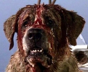what type of dog is cujo