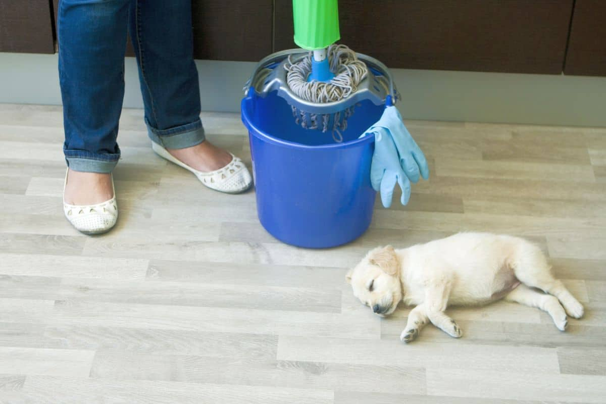4 best pet safe floor cleaners which