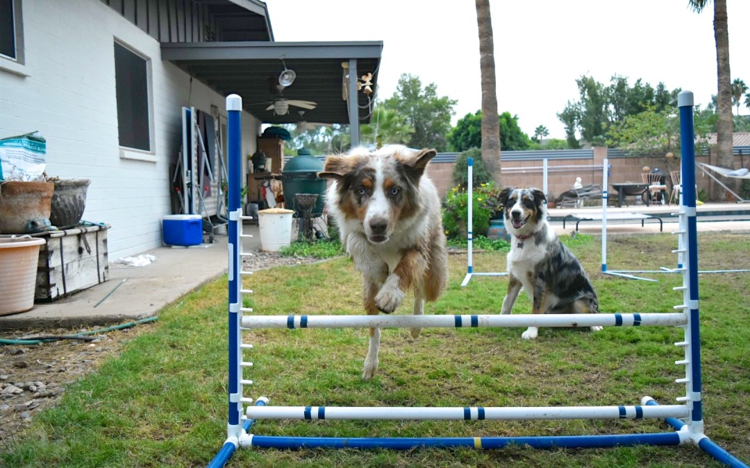 Double Dog Training