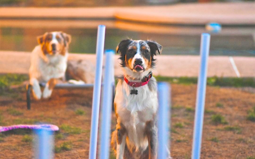 Double Dog Training