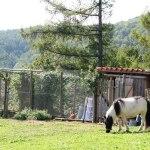 casa rural ecológica - Kaaño etxea-galeria-1- pony en gallinero