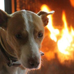 casa rural ecológica Kaaño etxea-galeria-2 - Lupo nuestro perro, uno más de la familia